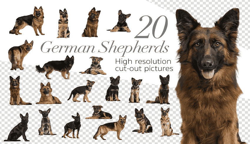 Bộ Ảnh xóa nền gồm 20 Chú chó cho Photoshop