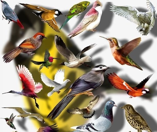 Raster clip art - Colored birds